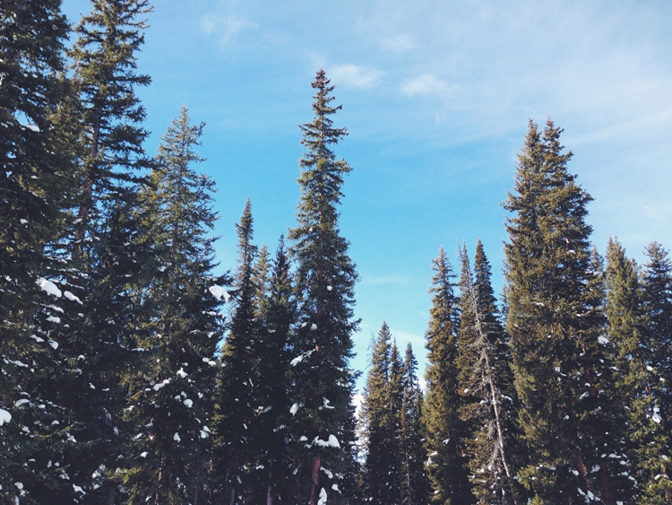 Winter Trees in Steamboat Springs