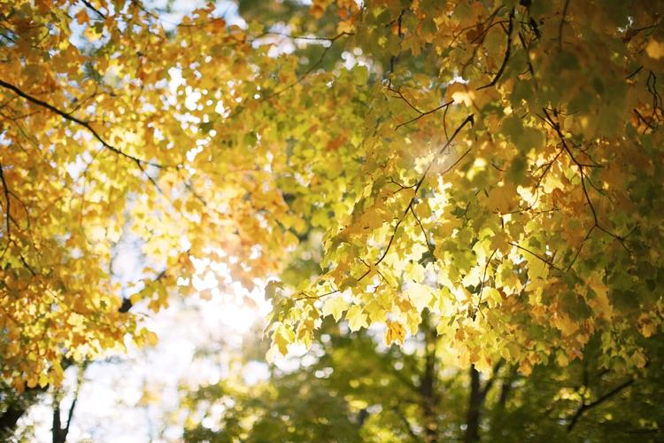 Colorful Ohio Fall Leaves