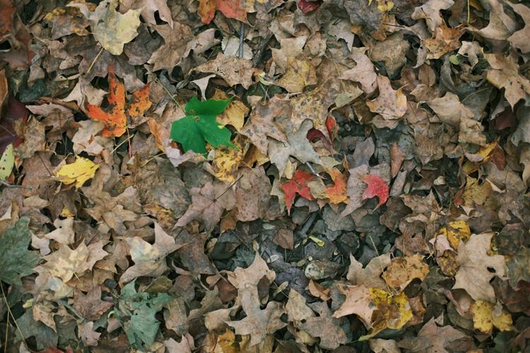 Whitesburg Nature Preserve Chagrin Falls Ohio