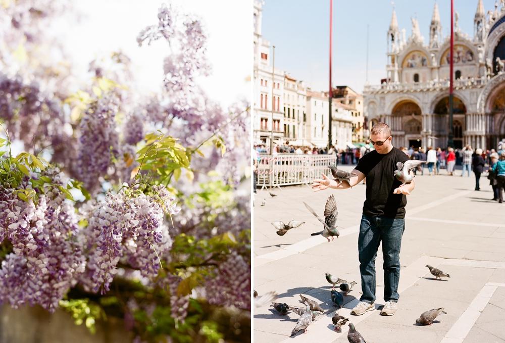 Birds at Piazza San Marco Venice