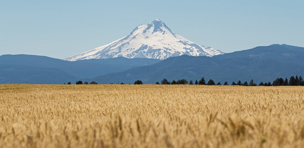 what field in front of mt. hood oregon
