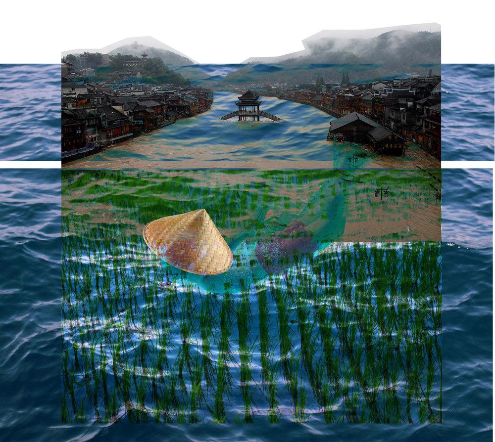 swimming_rice.jpg