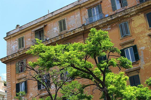 Vatican City. . . . #VacticanCity #Explore #Roma #Rome #Italy #CityTravel #ItalianArchitecture #BoldColours #UrbanEnvironment #Nature #Contrast #CanonPhotography #CanonPhotography #TravelPhoto