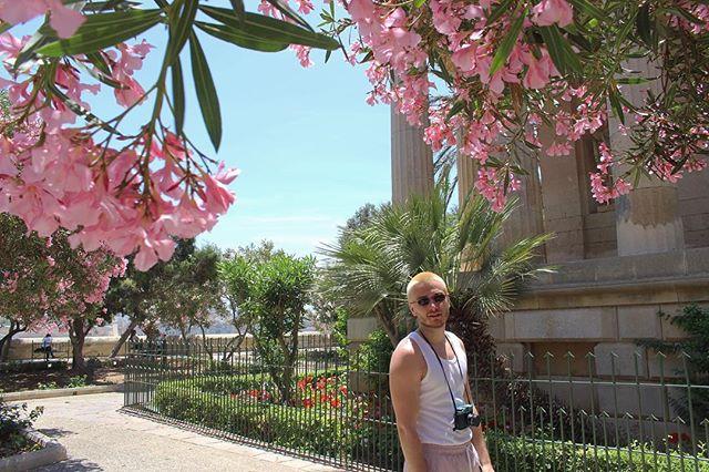 Barrakka Gardens. . . . . #BarrakkaGardens #PinkBlossom #Terrace #Valletta #Malta #ExploreEurope #Photography#Canon700d #MalteseHistory  #Nature