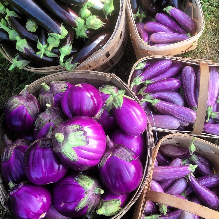 gallery_eggplant.jpg