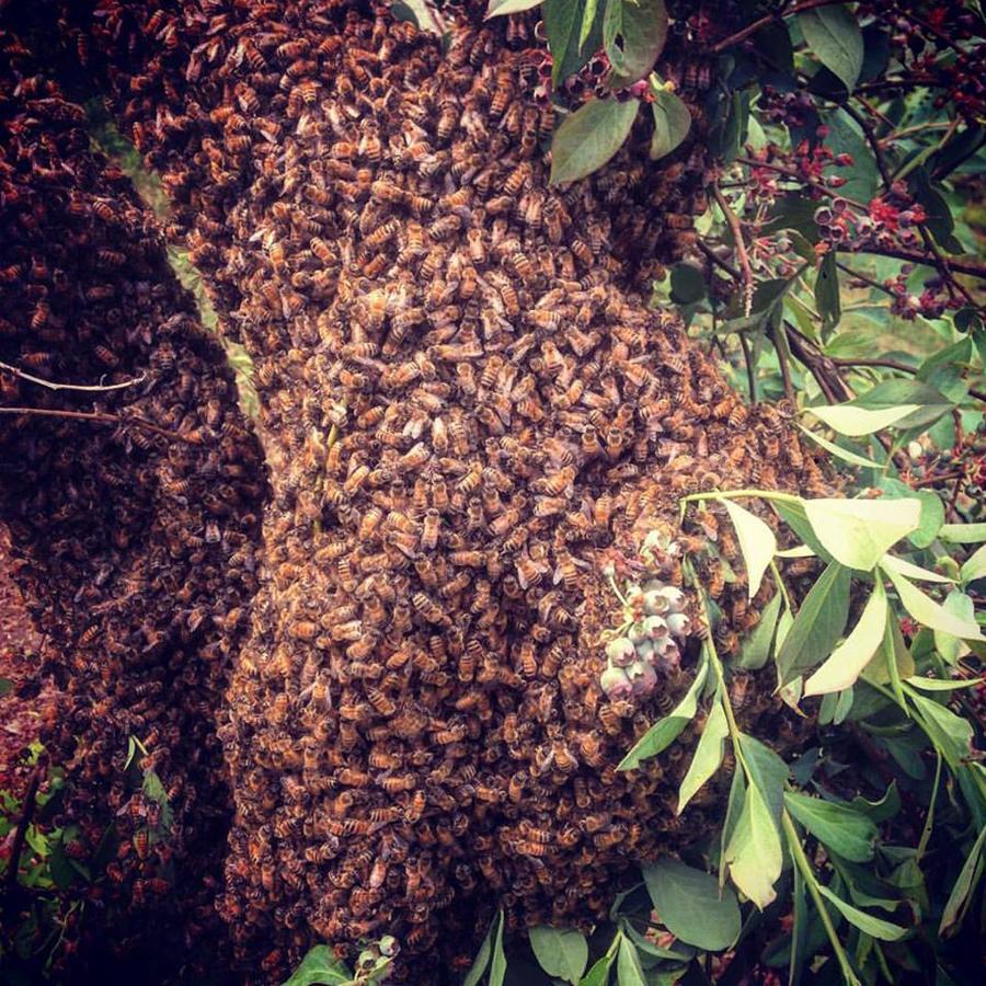 gallery_swarm.jpg