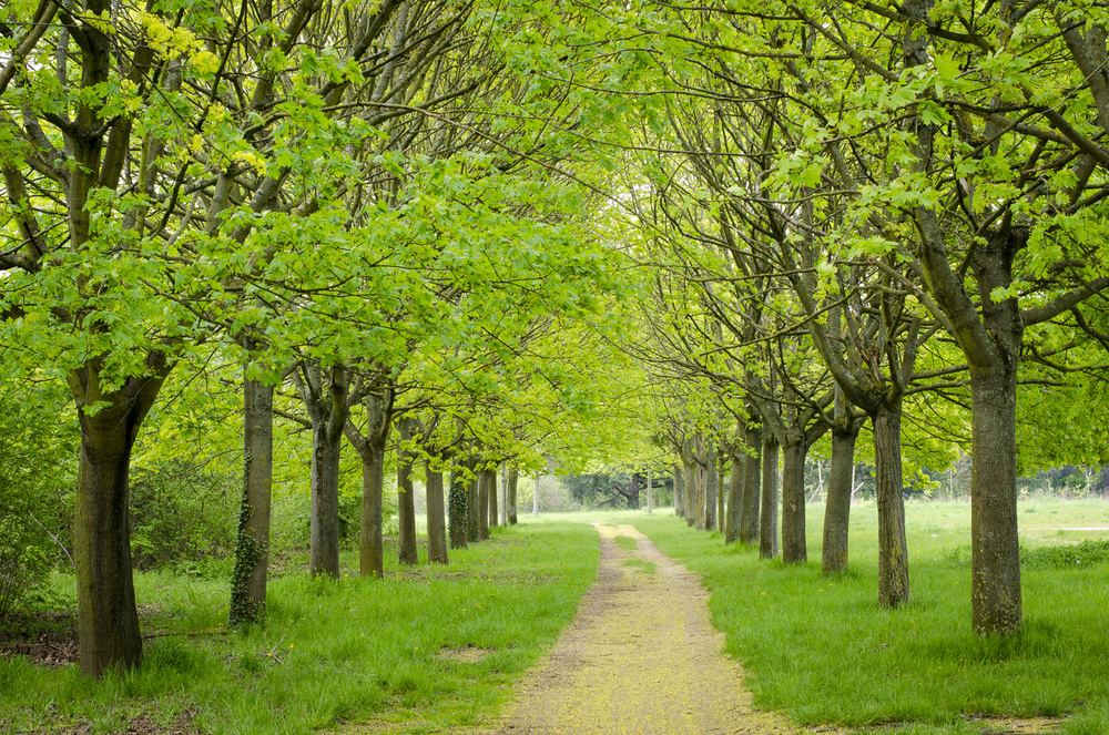 Bois de Vincennes - Photography : Alexander J.E. Bradley - Nikon D7000 -Nikkor 500mm f/1.4 - F/11 - 1/10 - ISO:100