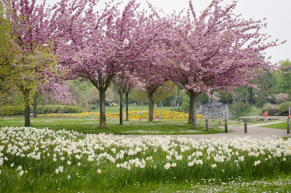 Parc Floral de Paris,Bois de Vincennes - Photography : Alexander J.E. Bradley - Nikon D7000 -Nikkor 500mm f/1.4 - F/16 - 1/30 - ISO:100