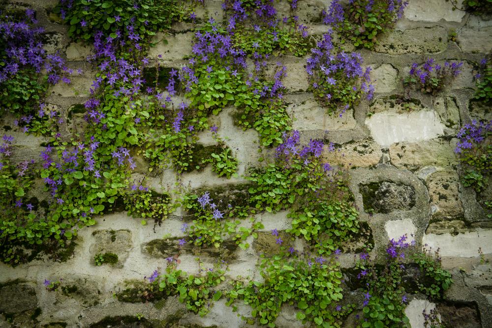RUE DE L'ABREUVOIR - PHOTOGRAPHY : WILLIAM LOUNSBURY - NIKON D800 - NIKKOR 24-70MM F/2.8 @ 52MM - F/4- 1/250- ISO:400