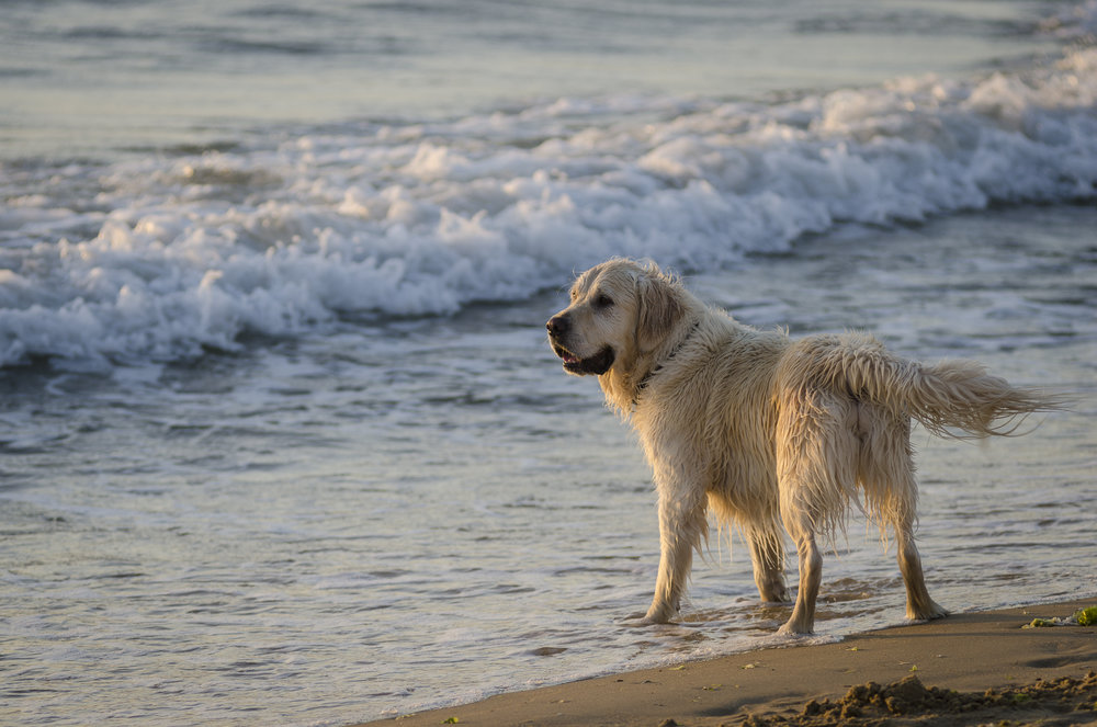 Dendy Street Beach PHOTOGRAPHY : ALEXANDER J.E. BRADLEY - NIKON D7000 - 80-200 F/2.8 @ 135MM - F/4 - 1/250 - ISO 100