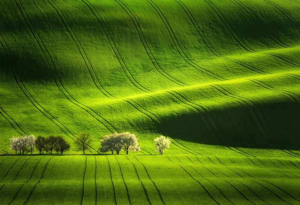 moravian tuscany fields  Photography: Martin Bisof