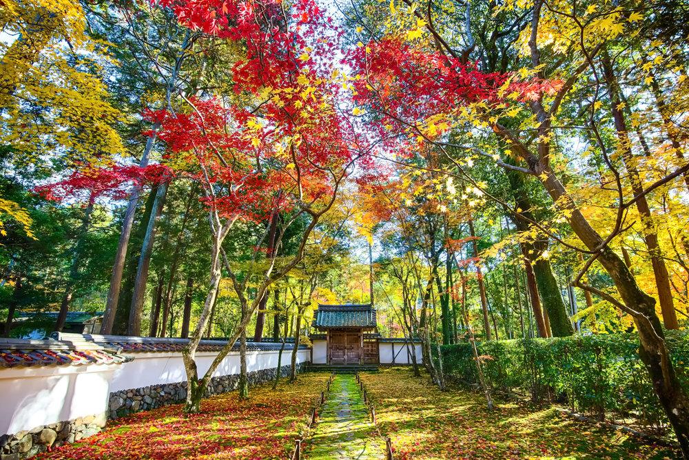 moss temple.jpg