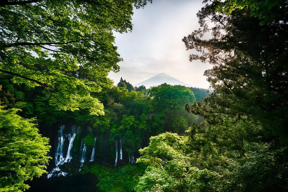 Shiraito + Fuji.jpg