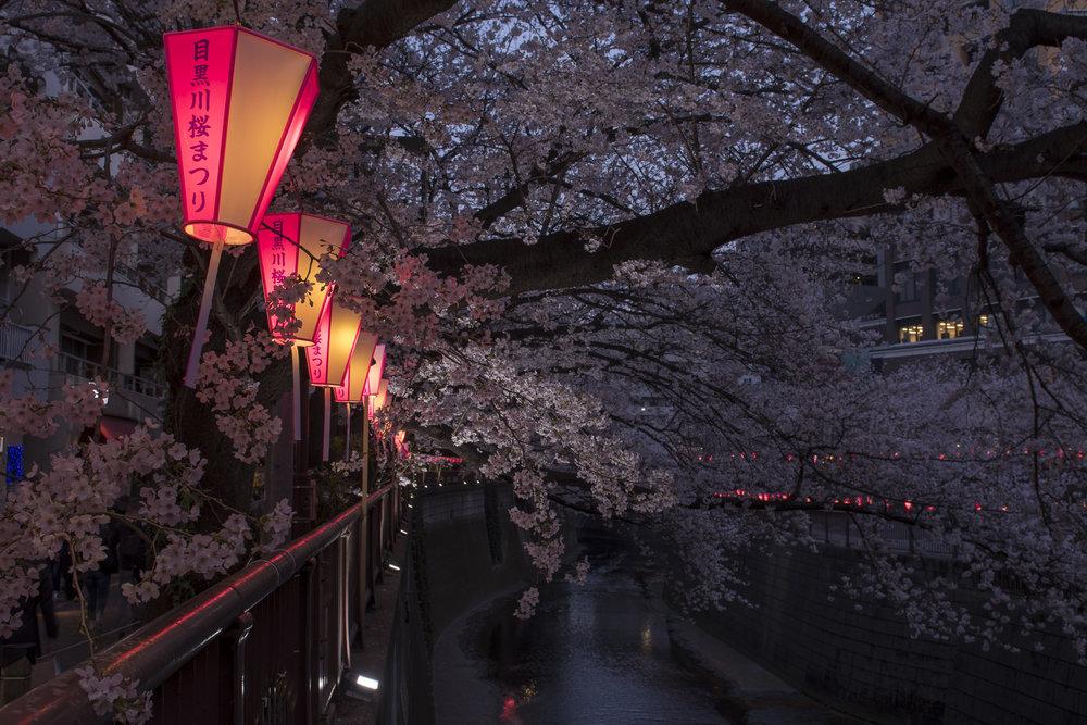Naka-meguro, Tokyo  PHOTOGRAPHY: Alexander J.E. Bradley •NIKON D500 • AF-S NIKKOR 24-70MM ƒ/2.8G ED @ 24MM • ƒ/8 •1/6 •ISO 100