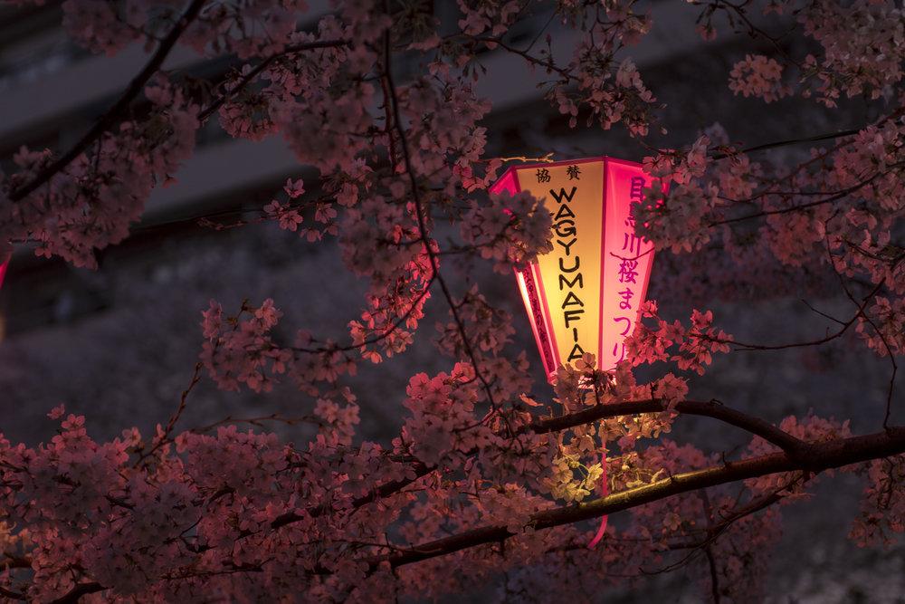 Naka-meguro, Tokyo  PHOTOGRAPHY: Alexander J.E. Bradley •NIKON D500 • AF-S NIKKOR 24-70MM ƒ/2.8G ED @ 70MM • ƒ/2.8 •1/60 •ISO 400