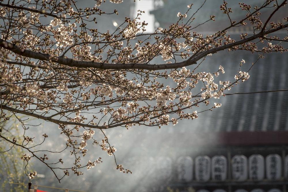 Ueno Park, Tokyo  Photography: Alexander J.E. Bradley • Nikon D500 • AF-S NIKKOR 70-200mm Ƒ/2.8E FL ED VR @ 200MM • Ƒ/5.6 • 1/320 • ISO 100