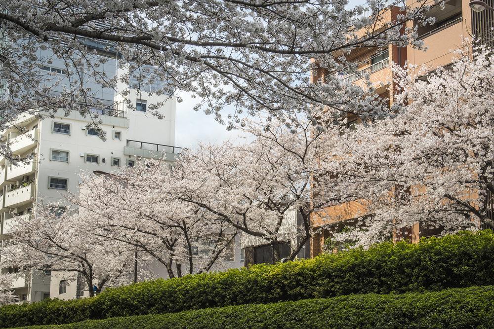 Meiji Dori, Tokyo  PHOTOGRAPHY: ALEXANDER J.E. BRADLEY • NIKON D500 • AF-S NIKKOR 24-70MM Ƒ/2.8G ED @ 44MM • Ƒ/11 • 1/125 • ISO 100