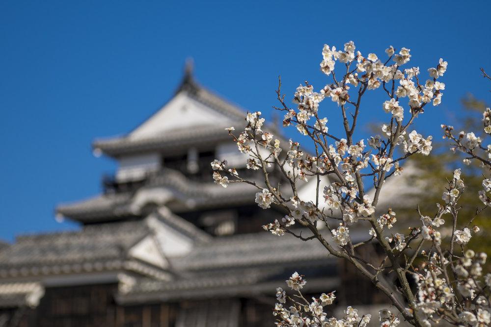 Matsuyama Castle, Matsuyama  Photography: Alexander J.E. Bradley • Nikon D500 • AF-S NIKKOR 70-200mm Ƒ/2.8E FL ED VR @ 200MM • Ƒ/4 • 1/400 • ISO 100