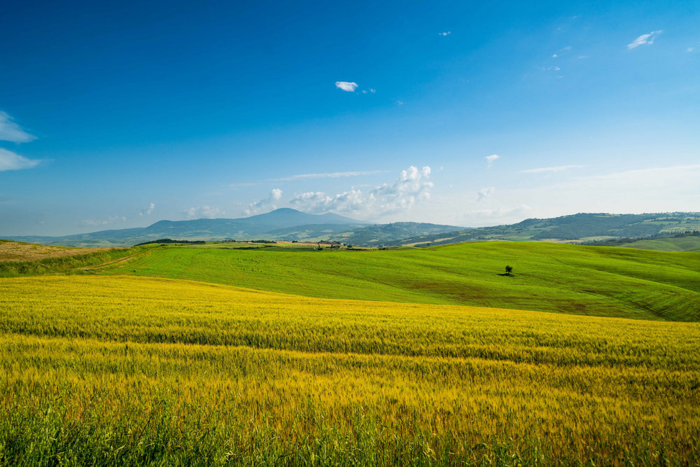 Fields of Val d'Orcia
