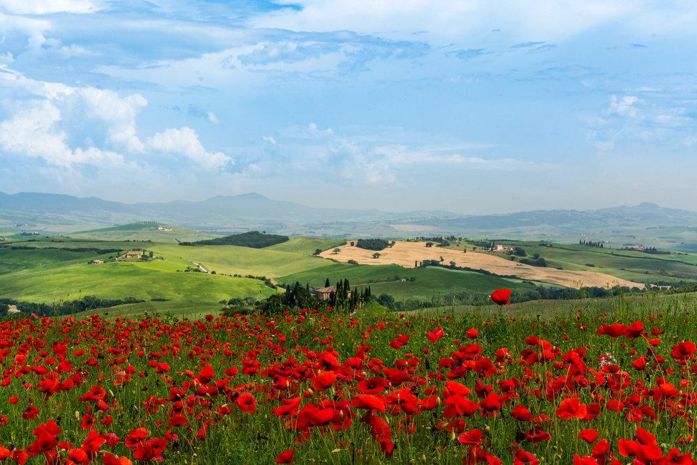 Copia di Red poppies overlooking Podere Belvedere.jpg