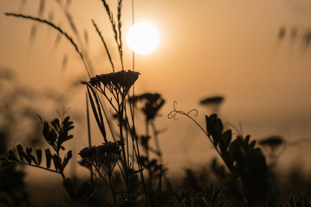 Copia di Wild flowers at sunrise.jpg