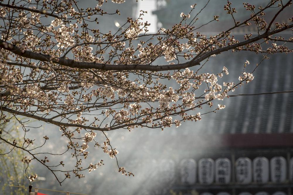 aperture-tours-tokyo-017.jpg