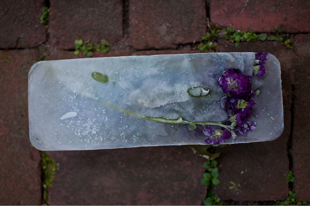 ever remnants   cut flowers and ice