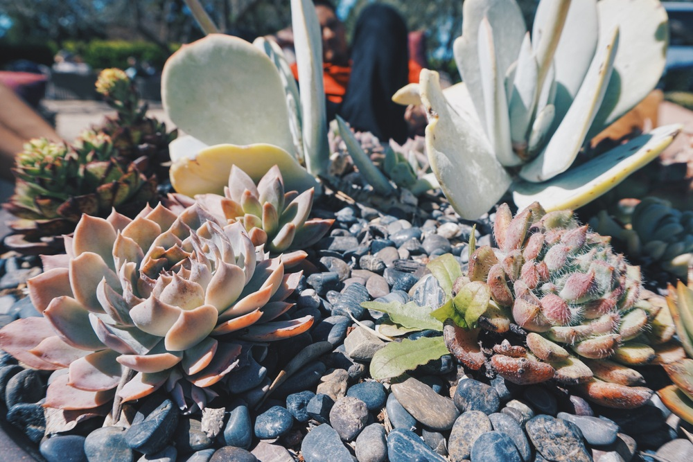 Succulent centerpieces in the middle of all their patio tables.