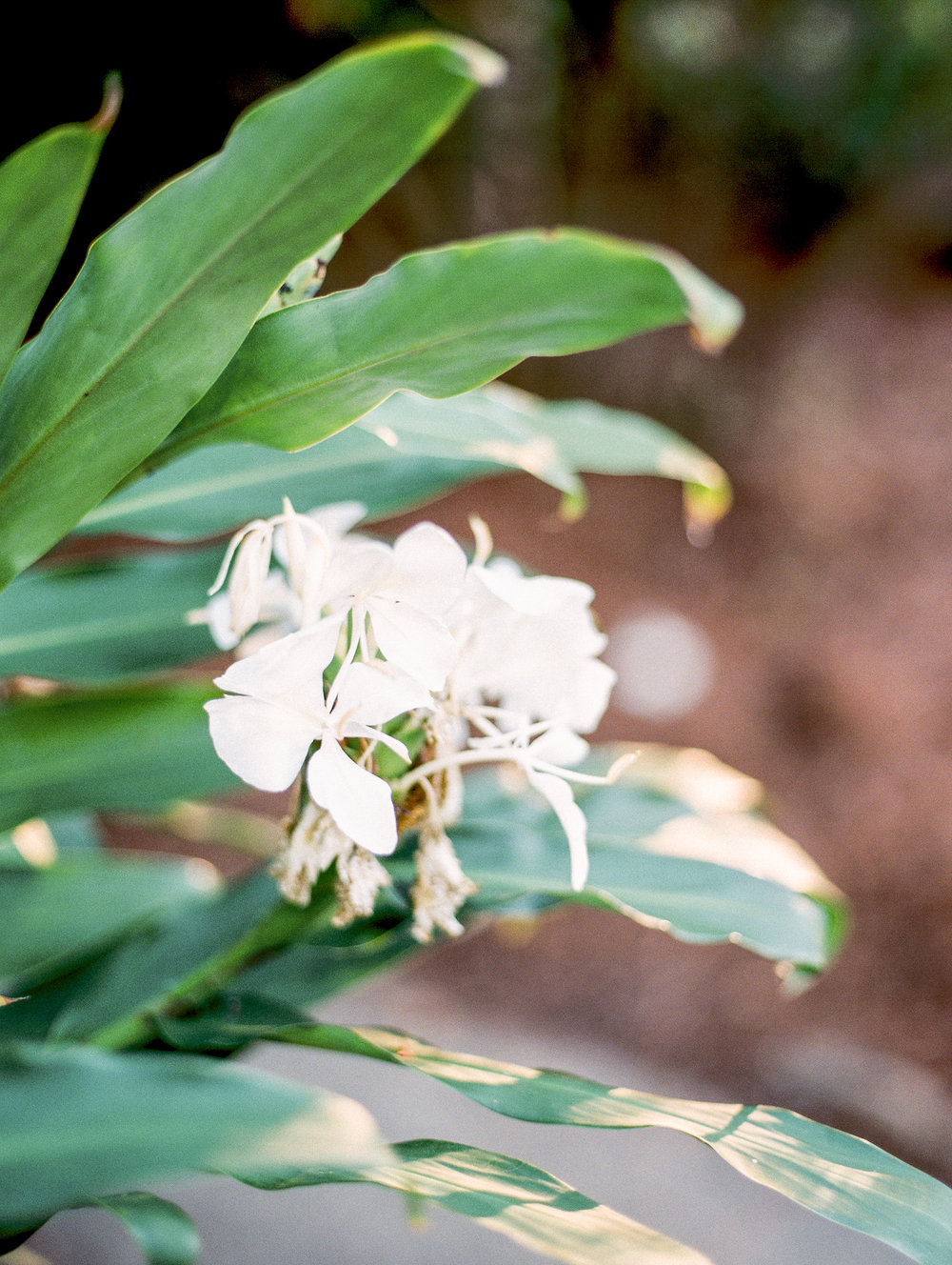 Weaver_Family_Botanical_Gardens_Columbus_Georgia_Fallen_Photography-99.JPG