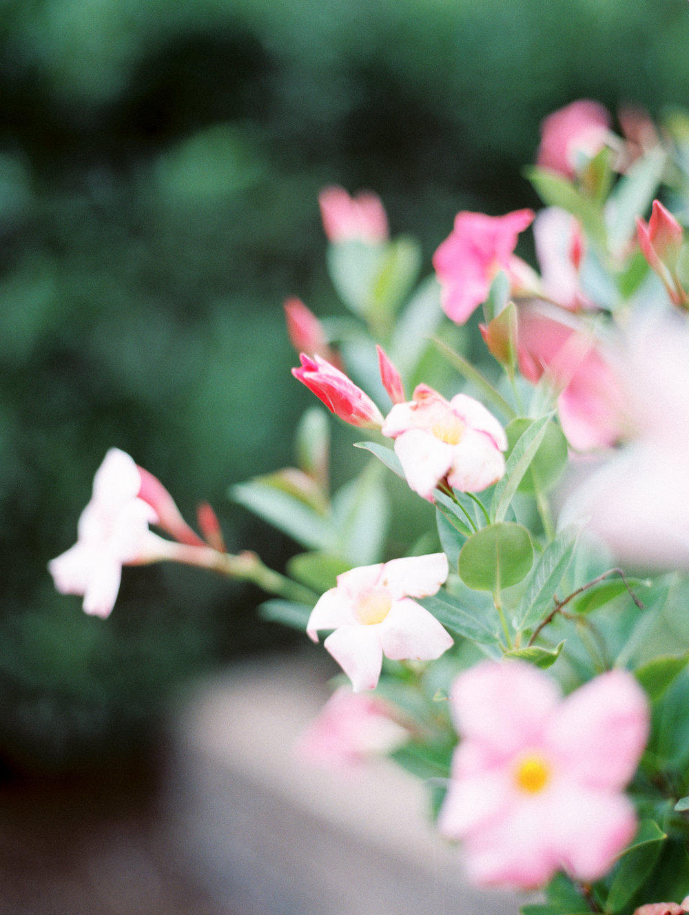 Weaver_Family_Botanical_Gardens_Columbus_Georgia_Fallen_Photography-96.JPG
