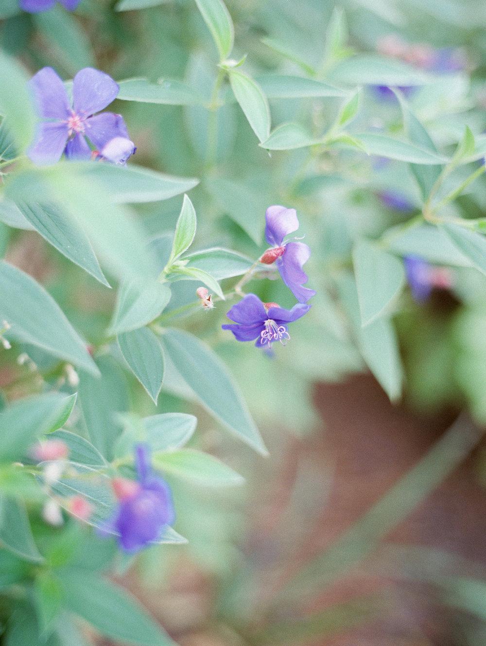 Weaver_Family_Botanical_Gardens_Columbus_Georgia_Fallen_Photography-107.JPG
