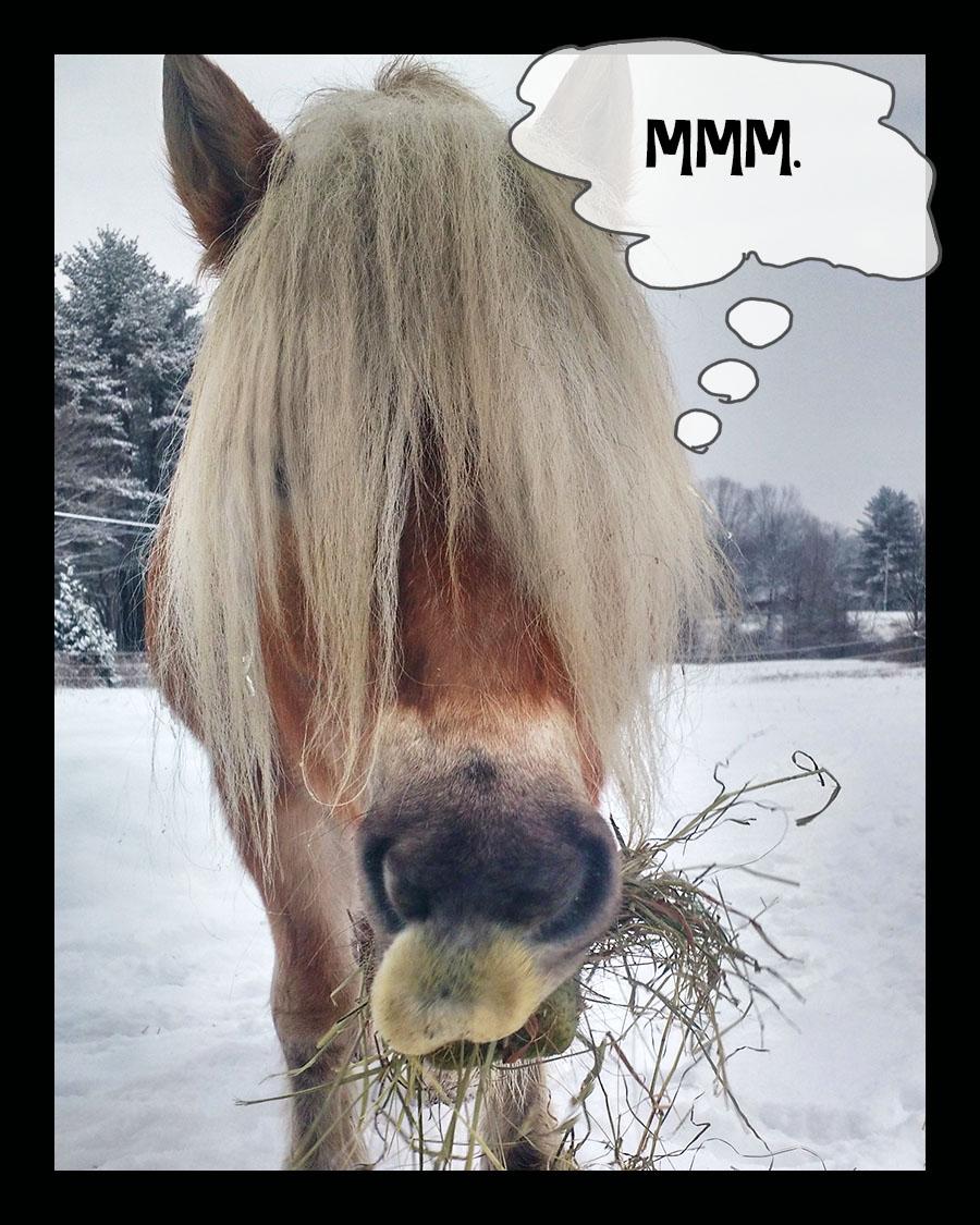 ddh eats hay.jpg