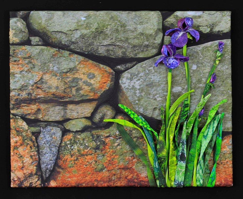 Iris with stone wall.jpg