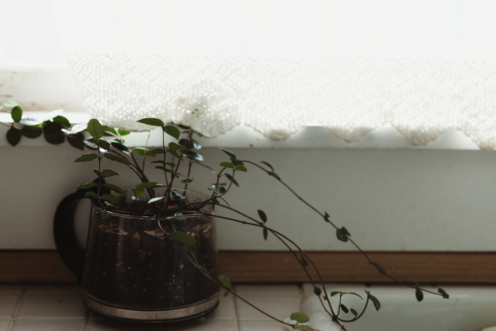 plant-10.jpg