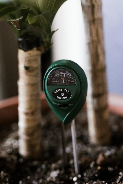 plantstick-1.jpg