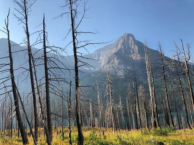 More wildfires now in areas of Glacier we visited just last week. Wondering when we'll wake up and collectively combat climate change... and racism, sexism, homelessness, ____phobia, hunger, etc. while we're at it. Sheesh. What are you seeing or reading that's giving you hope right now? What's making you laugh? #mercuryinretrograde