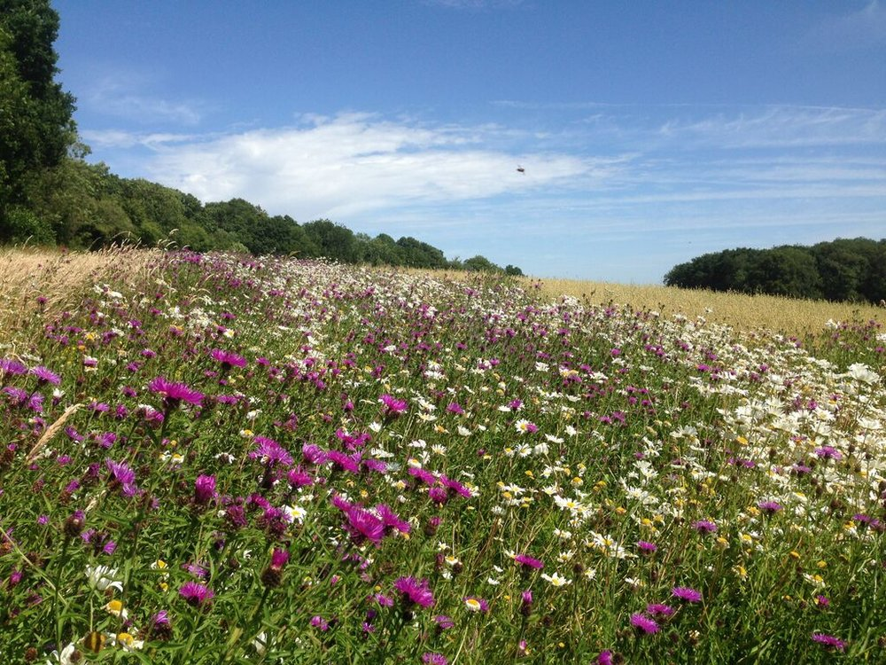 Flower-rich habitats attract diverse pollinators to pollinate crops and to eat pests