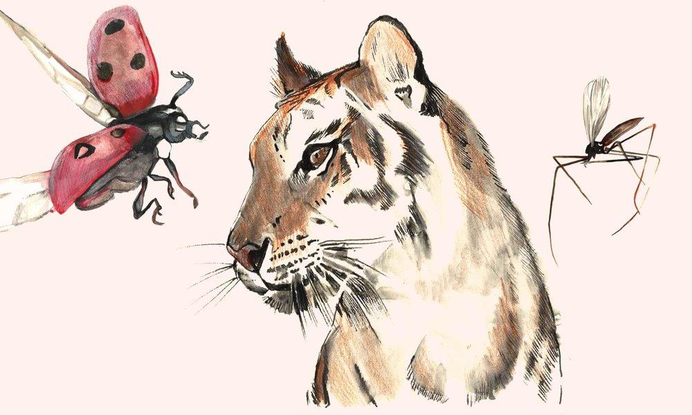 Illustration: Frances Marriott