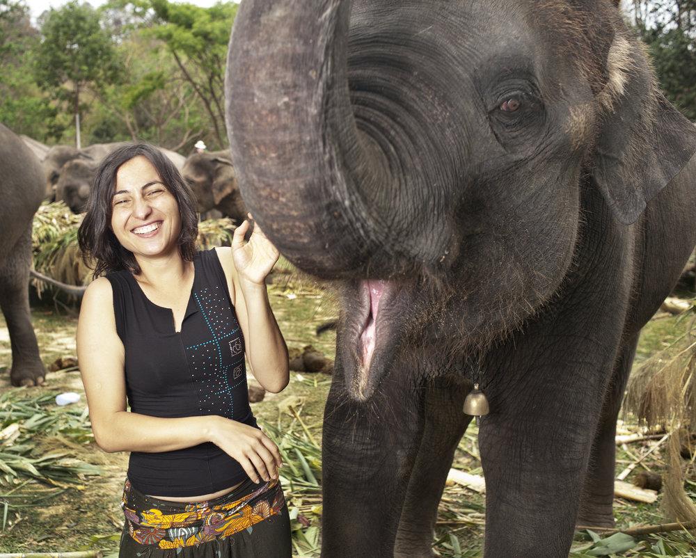 Thailand, Chiang Mai, Elephant