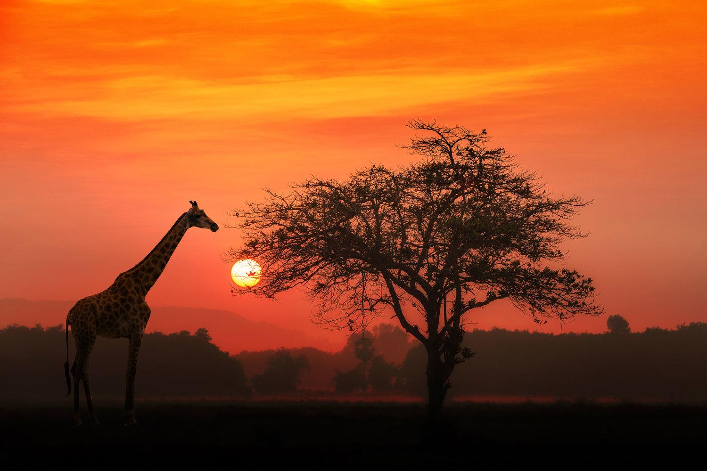 Africa Serengeti National Park Safari Resized