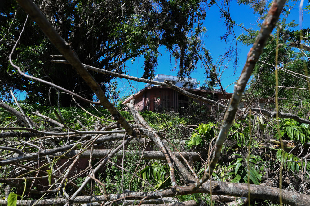 A house in Maguayo is covered in power lines and tree limbs.