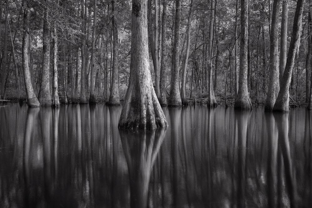 S.C. Swamp