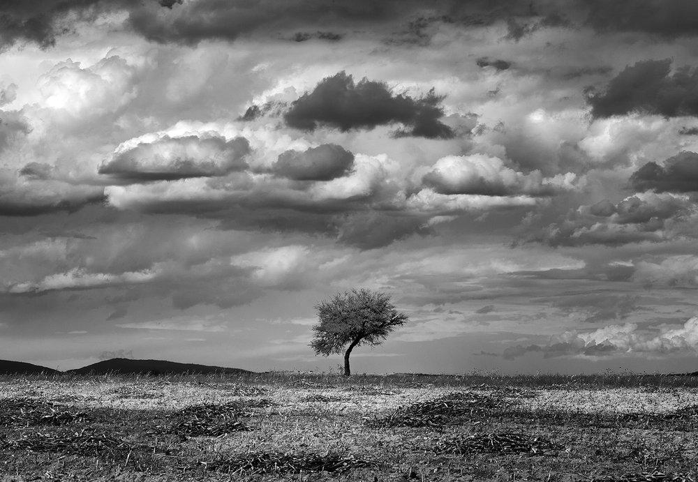 Mexico Tree