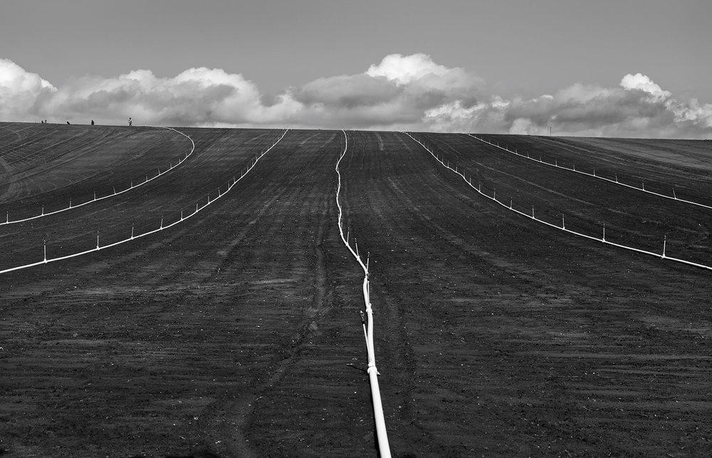 Crop Land
