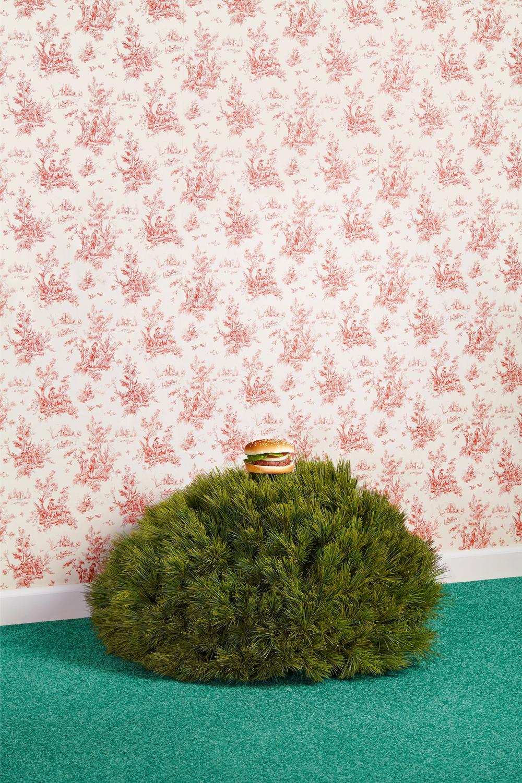 _hamburgerbush_3k_retina.jpg