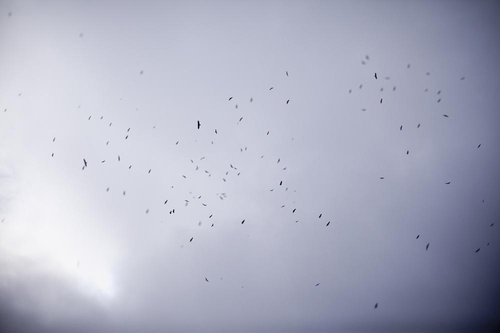 buzzard-overlay_1200_o.jpg
