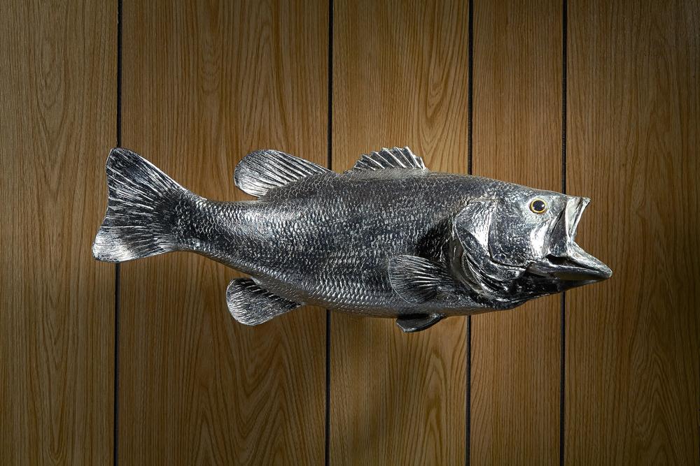 silverfish_1_3k_edit.jpg