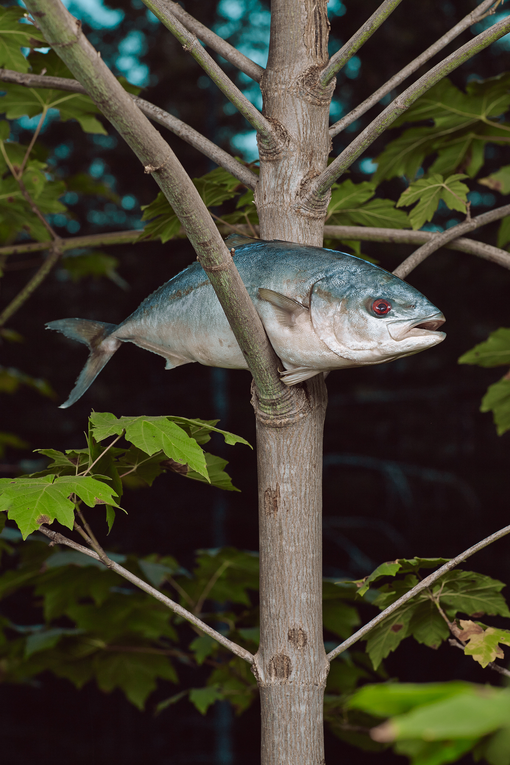 _fish in trees2522_cropped.jpg