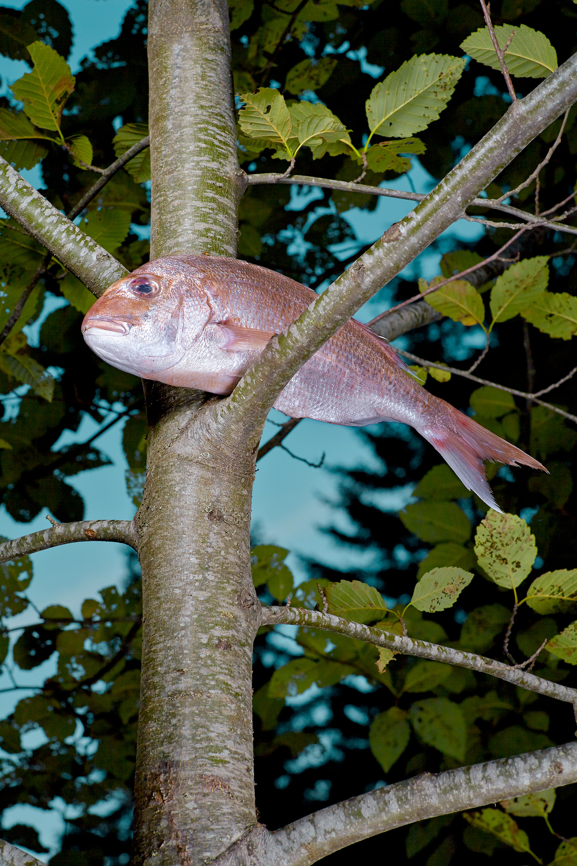_fish in trees2494_3k_edit.jpg