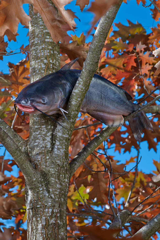 catfish0_3k.jpg